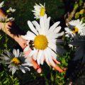 Biene sitzt auf Blüte
